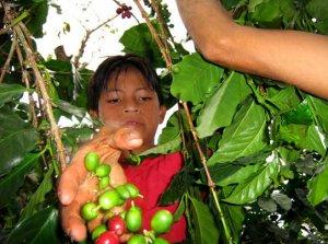 En los últimos y primeros meses del año, es posible observar la peregrinación de cientos de familias guatemaltecas hacia las grandes explotaciones agrícolas del sur del país.