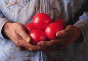 La propuesta recomienda conceder permisos temporales de trabajo a millones de campesinos sin papeles.